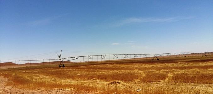 ورقلة زراعة الحبوب