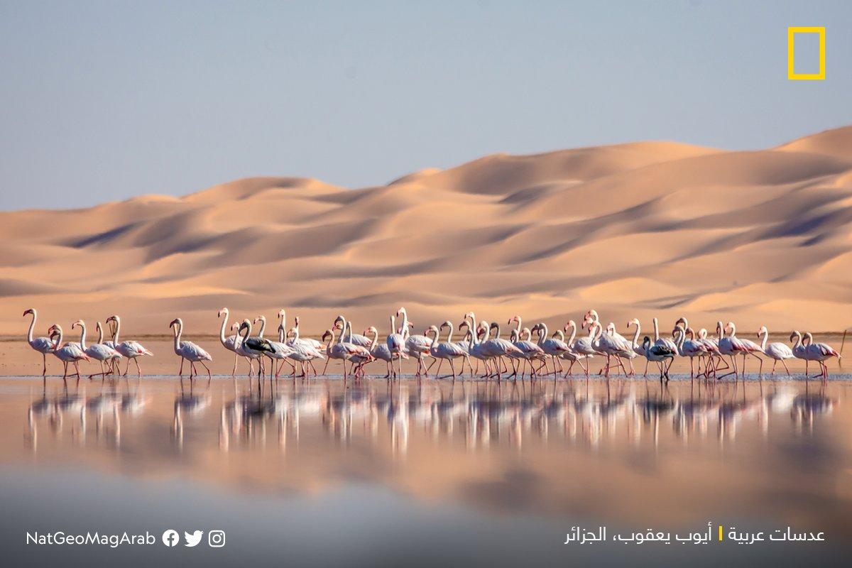 نحام وردي صورة ايوب يعقوب لناتينال جيوغرافيك عربية