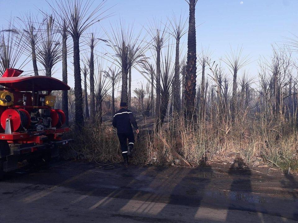 بالة حريق يتلف غابات النخيل