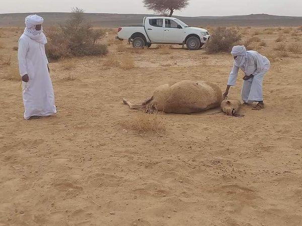 نفوق الإبل,جمعية القافلة لحماية البيئة بحاسي مسعود